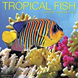 Tropical Fish 2020 Wall Calendar