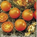 Tomato Garden Seeds - Sunsugar Hybrid - Non-GMO, Vegetable Gardening Seed - Sun Sugar