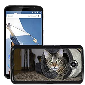 Super Stella Slim PC Hard Case Cover Skin Armor Shell Protection // M00148999 Hangover Cat Domestic Cat Adidas // LG Google Nexus 6
