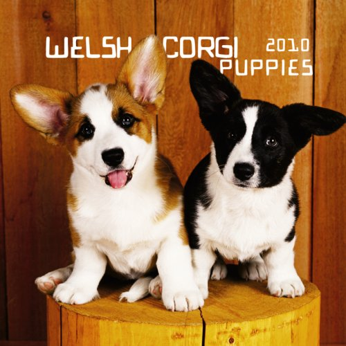 Welsh Corgi Puppies 2010 Mini ()