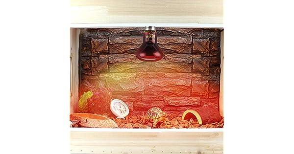Amazon.com: Aoile LED rojo Reptil luz nocturna UVA ...
