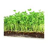 """buy Microgreen Organic Pea Shoot 3 Pack Refill–Pre-measured Soil + Seed, Use with Window Garden Multi-Use 15"""" x 6"""" Planter Tray. Easy and Convenient, Enough to Sprout 3 Crops of Superfood. now, new 2019-2018 bestseller, review and Photo, best price $12.99"""