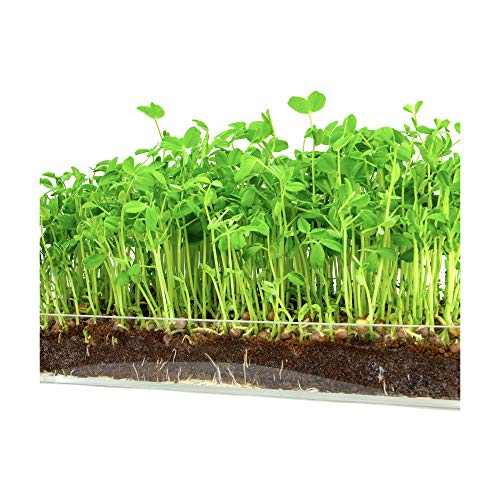 "- Microgreen Organic Pea Shoot 3 Pack Refill–Pre-measured Soil + Seed, Use with Window Garden Multi-Use 15"" x 6"" Planter Tray. Easy and Convenient, Enough to Sprout 3 Crops of Superfood."