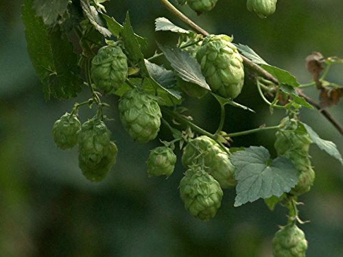 Yakima: The Quest for Hops - South Center Washington