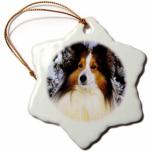3dRose Dogs Sheltie/Shetland Sheepdog - Sheltie - 3 inch Snowflake Porcelain Ornament (orn_640_1)