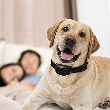 dressage chien gratuit