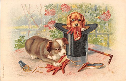 (Puppies chewing on gloves one in top hat cane to the side antique postcard Y3135)