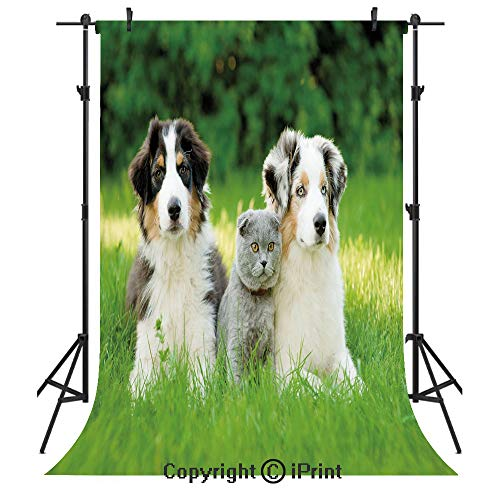 Dog Photography Backdrops,Cute Pets Puppy Family in the Garden Australian Shepherds and A Cat Scenery Decorative,Birthday Party Seamless Photo Studio Booth Background Banner 3x5ft,Cream Grey Fern Gree - Crayon Dog