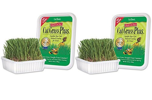 Miracle Care – CatAbout Easy to Grow Cat Grass Plus Container, Multi-Cat Size – 150 Grams (2 Pack)