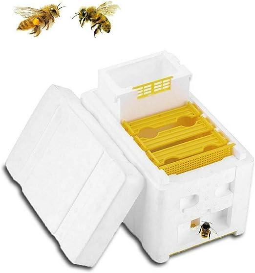 Beekeeping Queen Box Pollination Box Beekeeping Harvest Bee Supplies