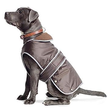 labrador dog coats