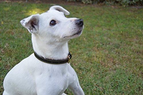 Leather Padded Dog Collar