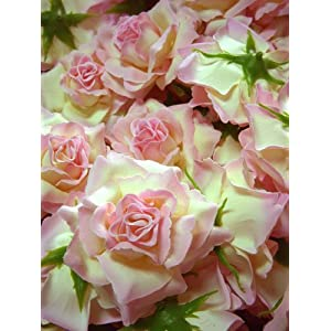"(12) BIG Cream Light Pink Edge Silk Roses Flower Head - 3.75"" - Artificial Flowers Heads Fabric Floral Supplies Wholesale Lot for Wedding Flowers Accessories Make Bridal Hair Clips Headbands Dress 2"