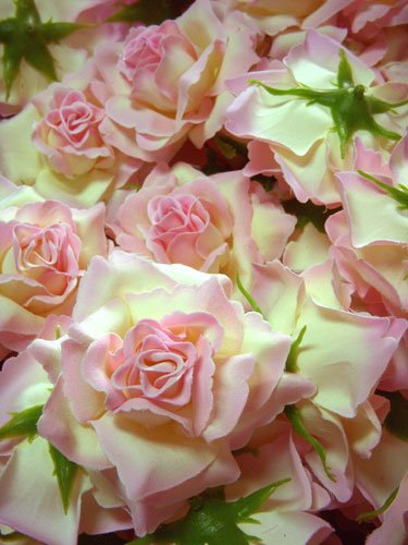Amazon 12 big cream light pink edge silk roses flower head 12 big cream light pink edge silk roses flower head 375quot mightylinksfo