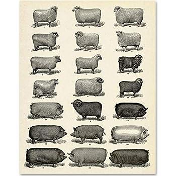Farm Animals - 11x14 Unframed Art Print - Makes a Great Home Decor Under $15