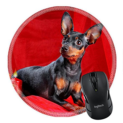 Breed Type (MSD Natural Rubber Mousepad Round Mouse Pad/Mat: 12440586 Miniature Pinscher on a red background The Miniature Pinscher Zwergpinscher Min Pin is a small breed of dog of the Pinscher type developed in)