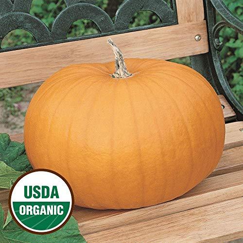 10 Organic Connecticut Field Pumpkin Seeds - everwilde Farms Mylar Seed Packet