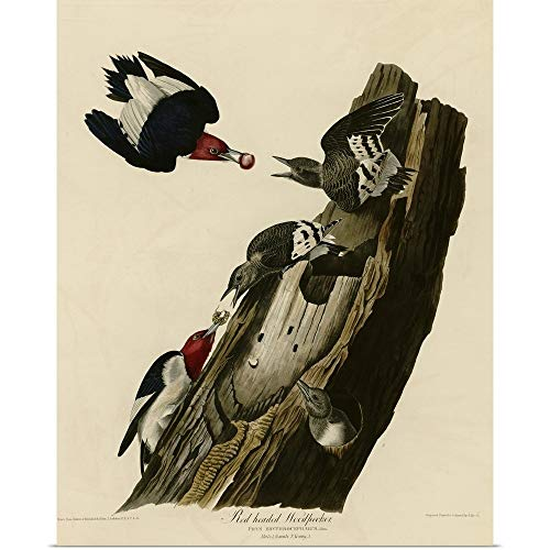 GREATBIGCANVAS Poster Print Entitled Red Headed Woodpecker by John James Audubon 29