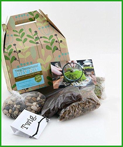 DIY Moss Terrarium Kit for One-gallon Sized ()