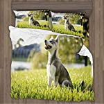 CUDEVS Alaskan Malamute,Twin Size Sheets Klee Kai Puppy Sitting on Grass Looking Up Friendly Young Cute Animal Drative for XL Singe 9