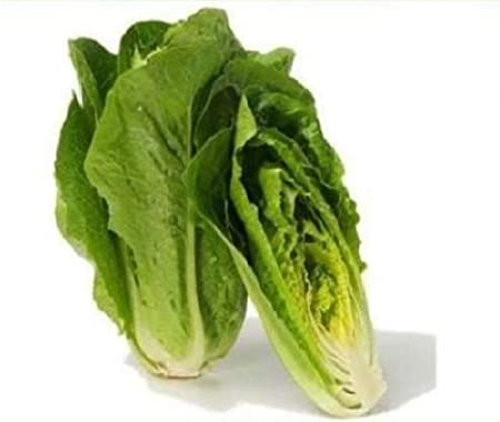 500 Parris Island Cos Heirloom Romaine Lettuce Seeds w Gift Combined SH