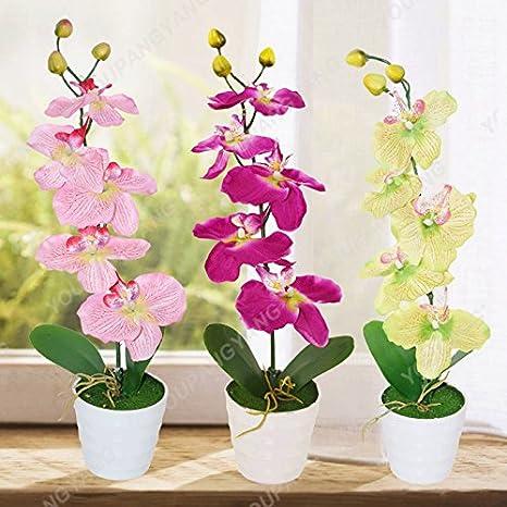 50-100Pcs Phalaenopsis Orchids Flower Seeds Rare 8 Kind Perennial Plant Home