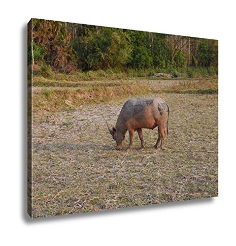 Ashley Canvas, View Of The Buffalo Is In The Farm, Home Decoration Office, Ready to Hang, 20x25, AG6345520 by Ashley Canvas