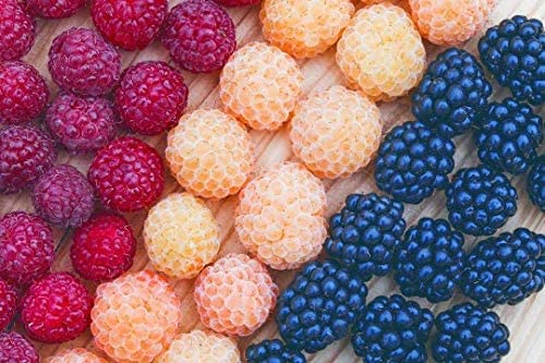 Yellow and Red Raspberry 40 Seeds Black Try Growing Raspberry in All Colours