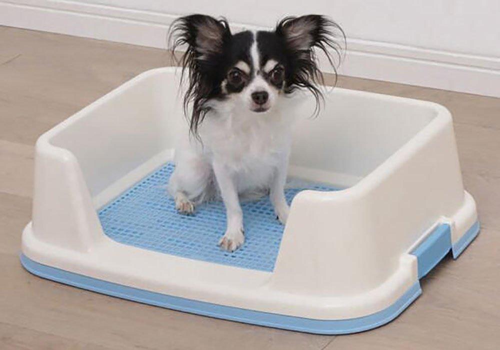 xueyan Pet Perro de Malla Doble chapoteo Medio Cerrado, trt650 Blue