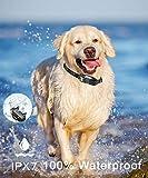 IQVenture Dog Training Collar,Long Range 2600ft