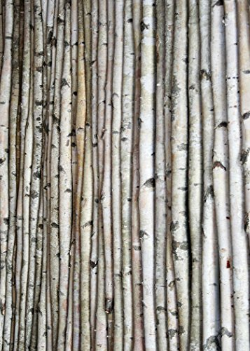 Wilson Enterprises White Birch Poles, Natural, Kiln Dried, Home Decor Birch (set of 2 poles, 8' long x 3-4 - Match Curtain Pole