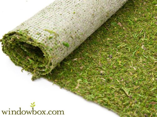 Preserved Green Moss Roll - 4 ft.