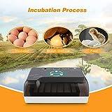 Egg Incubators Gift for Kids, 12 Eggs Fully