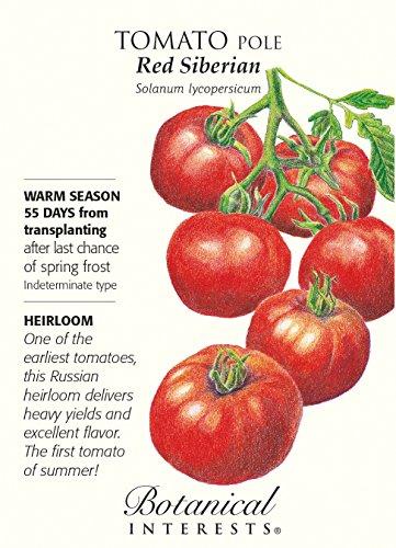 tomato seeds siberia - 8