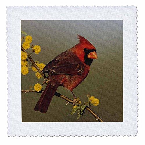 backyard bird quilts - 9