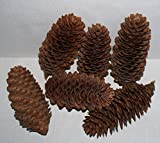 Pine Cone Assorted Box