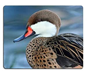 Bahama Pintail Bird Duck American Mouse Pads Customized Made to Order Support Ready 9 7/8 Inch (250mm) X 7 7/8 Inch (200mm) X 1/16 Inch (2mm) High Quality Eco Friendly Cloth with Neoprene Rubber Lux Mouse Pad Desktop Mousepad Laptop Mousepads Comfortable Computer Mouse Mat Cute Gaming Mouse_pad