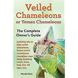 Veiled Chameleons or Yemen Chameleons as pets. info on baby veiled chameleons, female veiled chameleons, chameleon cage setup, breeding, colors, facts, food, diet, life span, size.