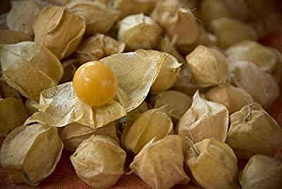 Cherry, Ground Cherry, Cape Gooseberry, 20 Seeds! Groco*