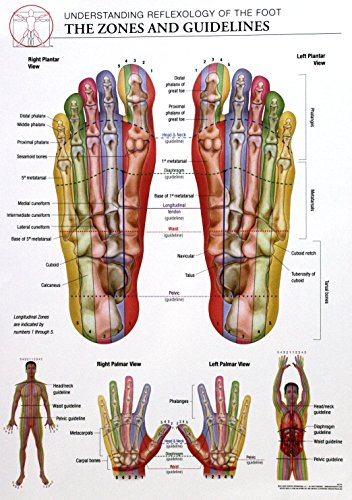 14x20 Anatomy Poster - Zones and Guidelines of The Reflexology of The Foot