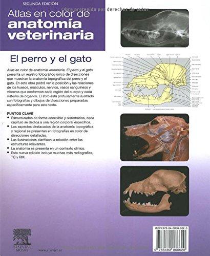 Atlas En Color De Anatomia Veterinaria El Perro Y El Gato: Stanley H ...