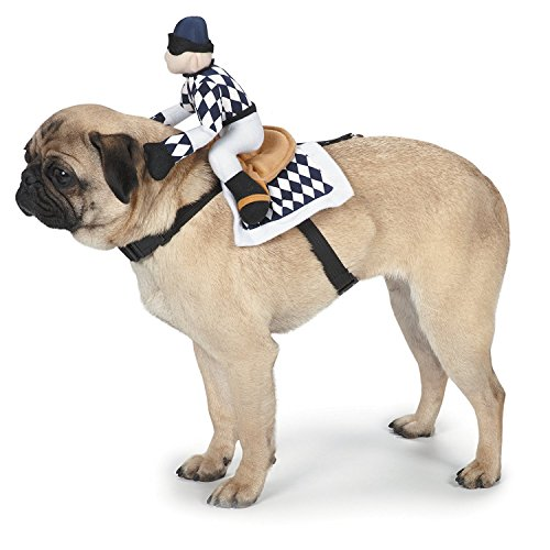 Black Pug Spider Costume (Zack & Zoey Show Jockey Saddle Dog Costume,)