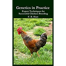 Genetics in Practice: Expert Techniques for Successful Chicken Breeding