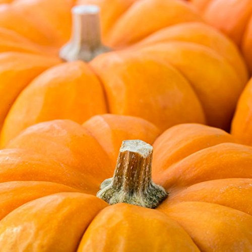 Pack of 1, 5 Lb. Fragrance Oil Pumpkin Scent, Phthalate Free