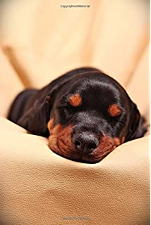 Buy So Cute Rottweiler Puppy Dog Pet Lined Journal Book Online At