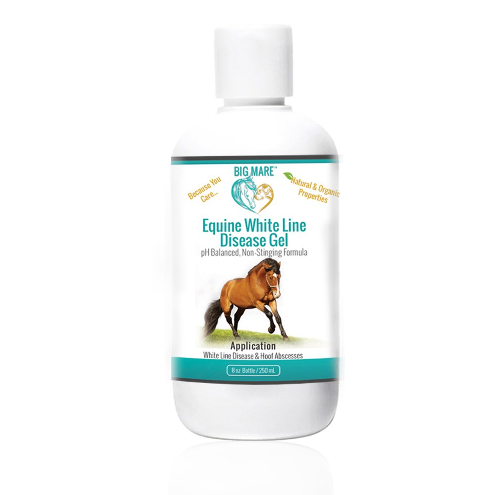 Big Mare Equine White Line Gel : Antibacterial/Antifungal. Clinically Proven Effective On White Line Disease And Abscesses. No Sting, No Stain Formulation. Veterinary Approved & Recommended. by Big Mare