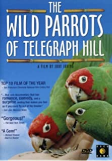 Amazon com: The Wild Parrots of Telegraph Hill: A Love Story