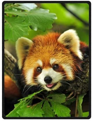Amazon Com Custom Special Design Funny Cute Red Panda Fleece Blankets Throws 58 X 80 Inches Large By Red Panda Fleece Blanket Home Kitchen