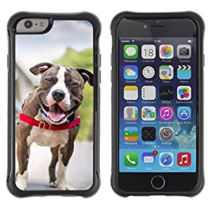 ZETECH CASES / Apple Iphone 6 PLUS 5.5 / BOSTON TERRIER FRENCH BULLDOG DOG PET / Boston terrier francés dogo perro mascota / Robusto Caso Carcaso Billetera Shell Armor Funda Case Cover Slim A
