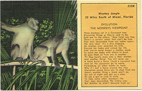 Evolution Postcard (1950s Vintage Postcard - Evolution - The Monkey's Viewpoint - Souvenir of Monkey Jungle near Miami)
